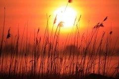 sun_house_nature_01.jpg